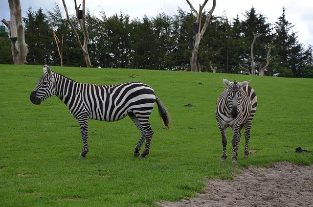 Koppenhágai állatkert